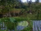 indonesia09_m